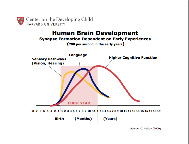 The period of most rapid synaptic development is the earliest years of life.